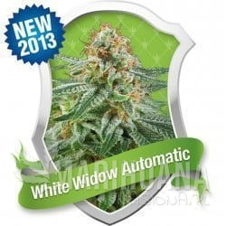 White Widow Automatic 1+1 - ROYAL QUEEN SEEDS