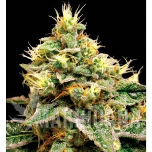 RESERVA PRIVADA - Confidential Cheese