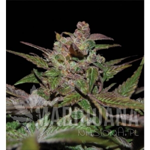 RESERVA PRIVADA - Purple Wreck