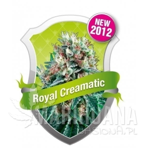 Royal Creamatic Automatic 1+1 - ROYAL QUEEN SEEDS