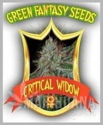 GREEN FANTASY SEEDS - Critical Widow