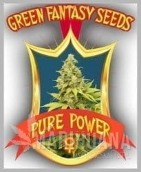 GREEN FANTASY SEEDS - Pure Power
