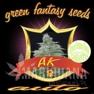 GREEN FANTASY SEEDS - Auto AK