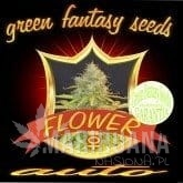GREEN FANTASY SEEDS - Auto Flower