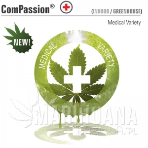 CBD ComPassion - DUTCH PASSION