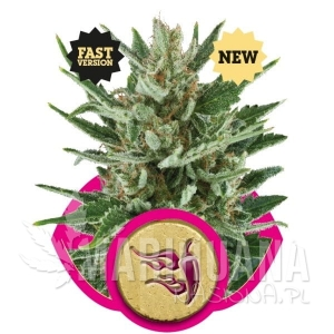Speedy Chile (Fast Version) - ROYAL QUEEN SEEDS