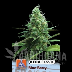 Blue Berry White - KERA SEEDS