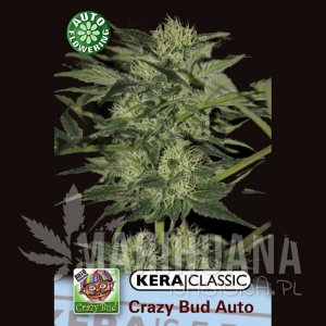 Crazy Bud - KERA SEEDS