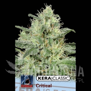 Critical - KERA SEEDS