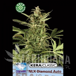 N.L.X. Diamond Auto - KERA SEEDS