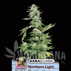 Northern Light - KERA SEEDS