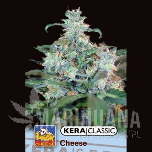 Special Cheese - KERA SEEDS