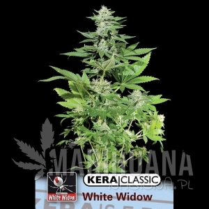 White Widow - KERA SEEDS