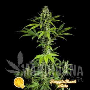 PHILOSOPHER SEEDS - Fraggle Skunk Auto