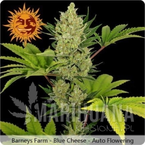 BARNEY'S FARM - Blue Cheese Auto