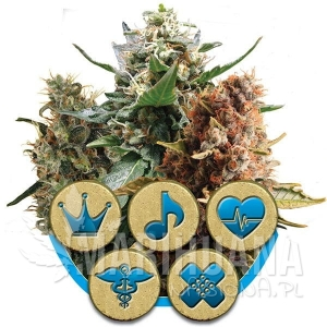 ROYAL QUEEN SEEDS - Medical Mix CBD