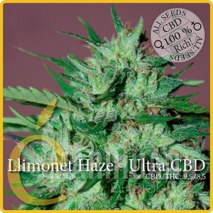 ELITE SEEDS - Llimonet Haze Ultra CBD