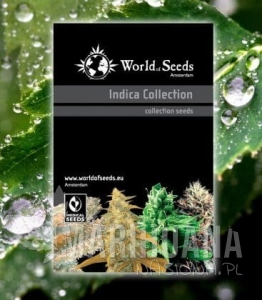 Indica Collection - WORLD OF SEEDS