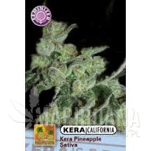 PINEAPPLE SATIVA - KERA SEEDS