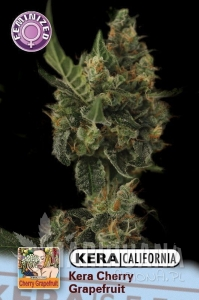 Cherry Grapefruit - KERA SEEDS
