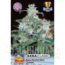 Amsterdam Cheese - KERA SEEDS
