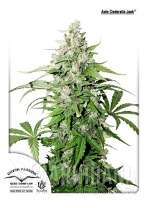 Auto Cinderella Jack® - DUTCH PASSION