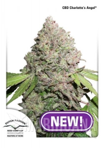 CBD Charlotte's Angel ® - DUTCH PASSION