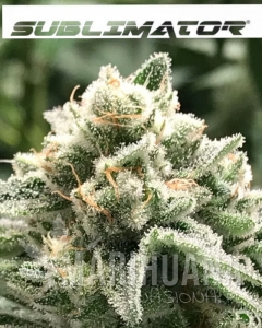 R-KIEM SEEDS - Sublimator