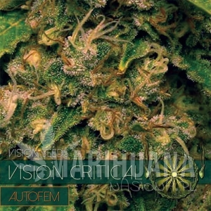 Vision Seeds - Vision Critical Auto