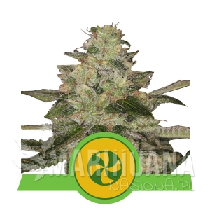 Sweet ZZ Automatic 1+1 - Royal Queen Seeds